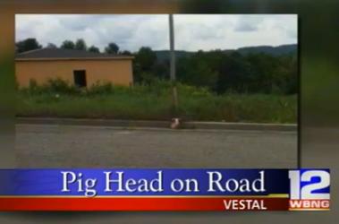 Vestal mosque pig's head