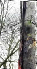 Burnt electricity pole Hatton