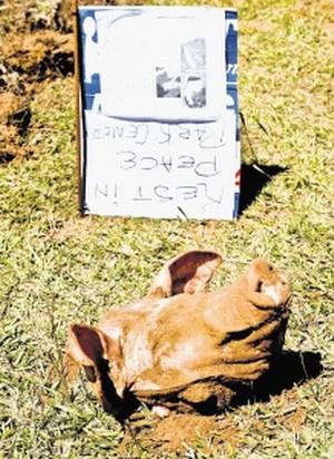 Mpumalanga mosque pig's head